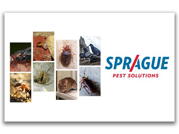 Sprague Pest